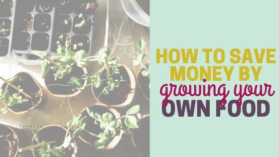 How to Save Money by Growing Your Own Food